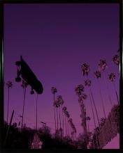 Purple Haze 💜